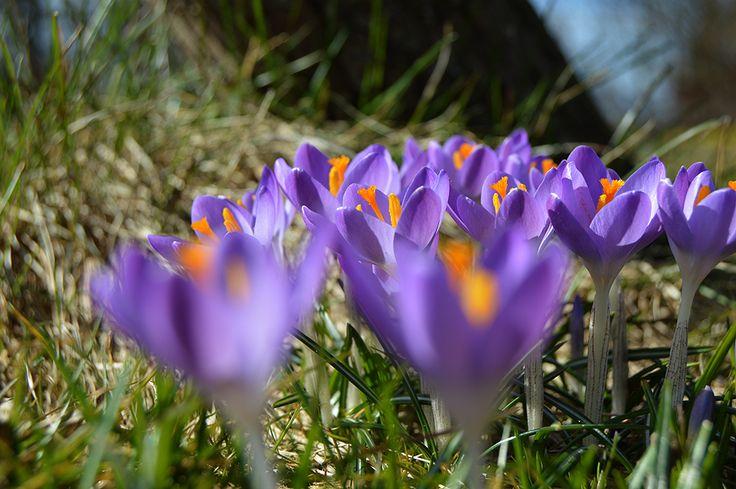 Det travle forår - Film