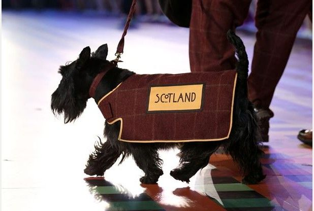 Scottie dogs win the show at the Commonwealth Games opening