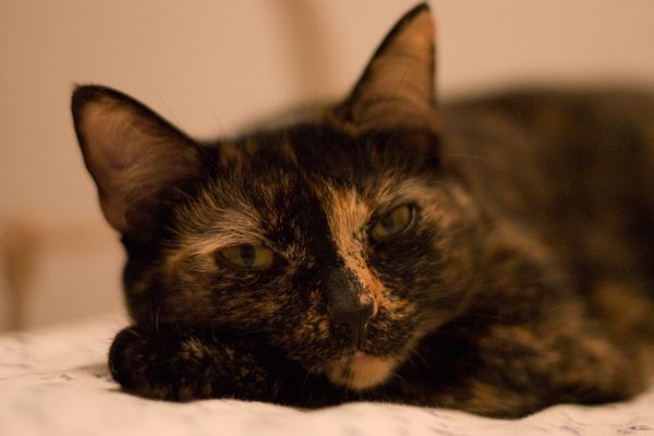 Peanut. From www.catster.com article Do Tortoiseshell cats Really Have Tortitude? http://www.catster.com/lifestyle/tortoiseshell-cats-tortitude