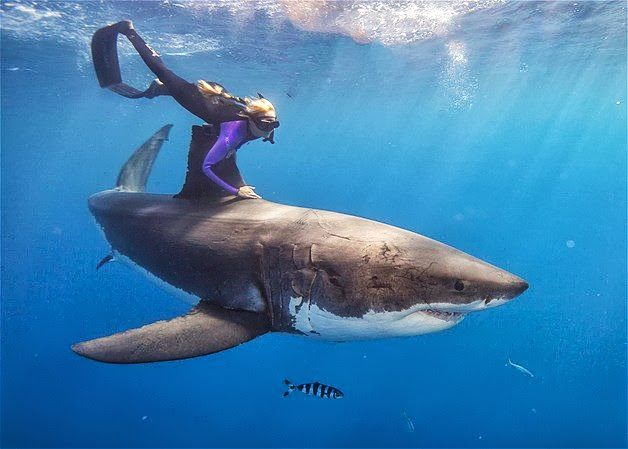 Shark conservationist and dive instructor Ocean Ramsey travels the globe swimming with many species of sharks in an effort to demonstrate that the ocean predators are nothing like their reputation from the 'Jaws' films. Here, she gets up close with a massive Great White.