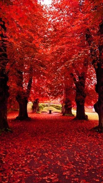 Red so Pretty