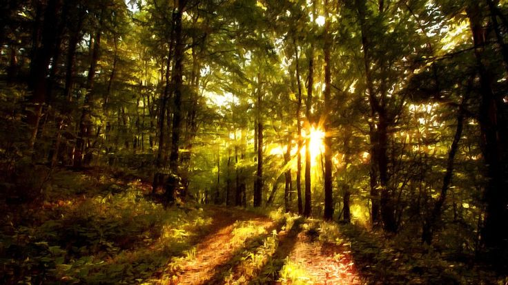 Beautiful Forest Paintings Beautiful Forest Paintings HD