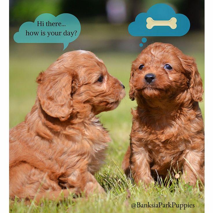 Doggy dialogue...hehe!!!