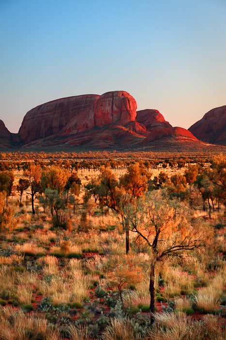 As If Set Afire  Uluru-Kata Tjuta National Park, Northern Territory, Australia    Light gleams across the landscape of shrubs and trees as it kisses the face of Kata Tjuta on sunrise.