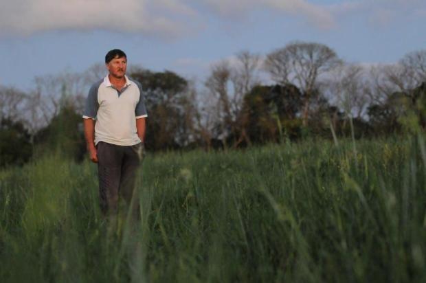 Redução no plantio de milho preocupa pecuaristas catarinenses Sirli Freitas/Especial