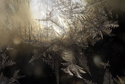 Forest at sunset seen through frost covered window