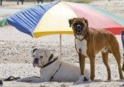 Una spiaggia per cani a Castellammare