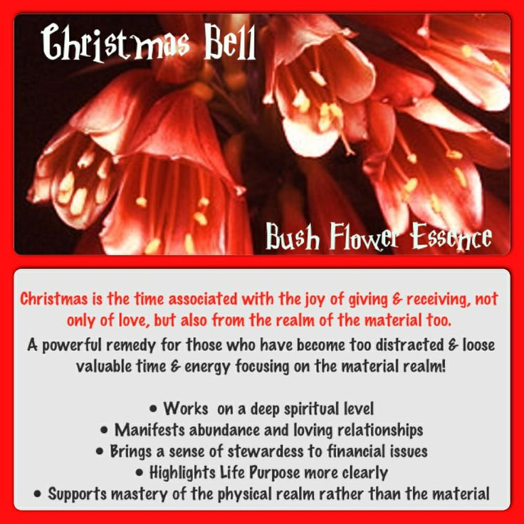 The Power Of Flowers - Christmas Bell Australian Bush Flower Essence
