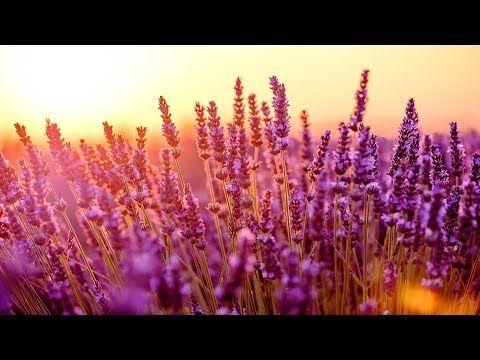 (1) Relaxing Piano Music: Relaxing Music, Study Music, Romantic Music, Sleep Music ★128 - YouTube