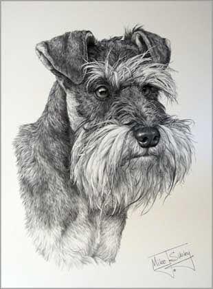Miniature Schnauzer Dog Print