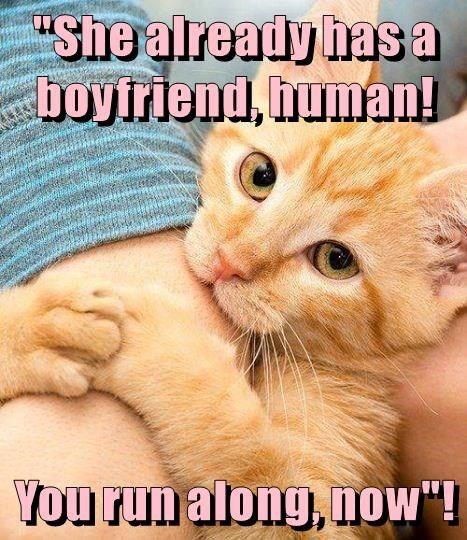 """""""She already has a boyfriend, human! You run along, now""""! http://cheezburger.com/9024214016"""