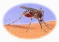 Mosquito repellant myths...read this before you invest in listerine for your deck or limes and cloves.