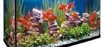 Oferta Kit acuario agua caliente 100 l.