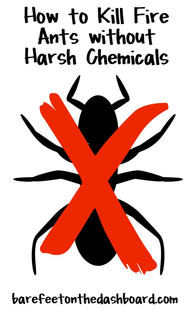 25 unique fire ant killers ideas on pinterest silver fish bug how to kill fire ants without harsh chemicals ccuart Images