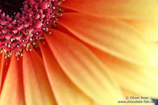 close up flowers - Google Search