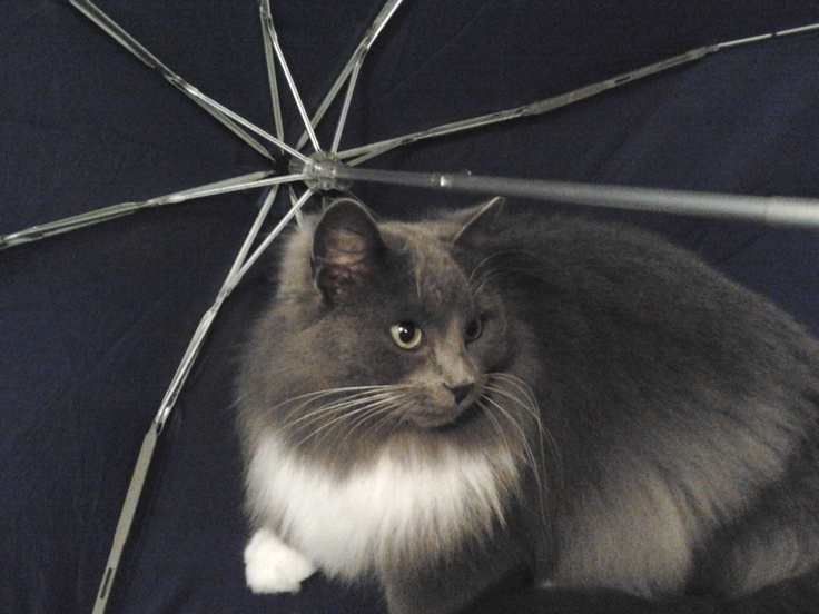 Elsa is posing by my drying umbrella on a rainy day :)