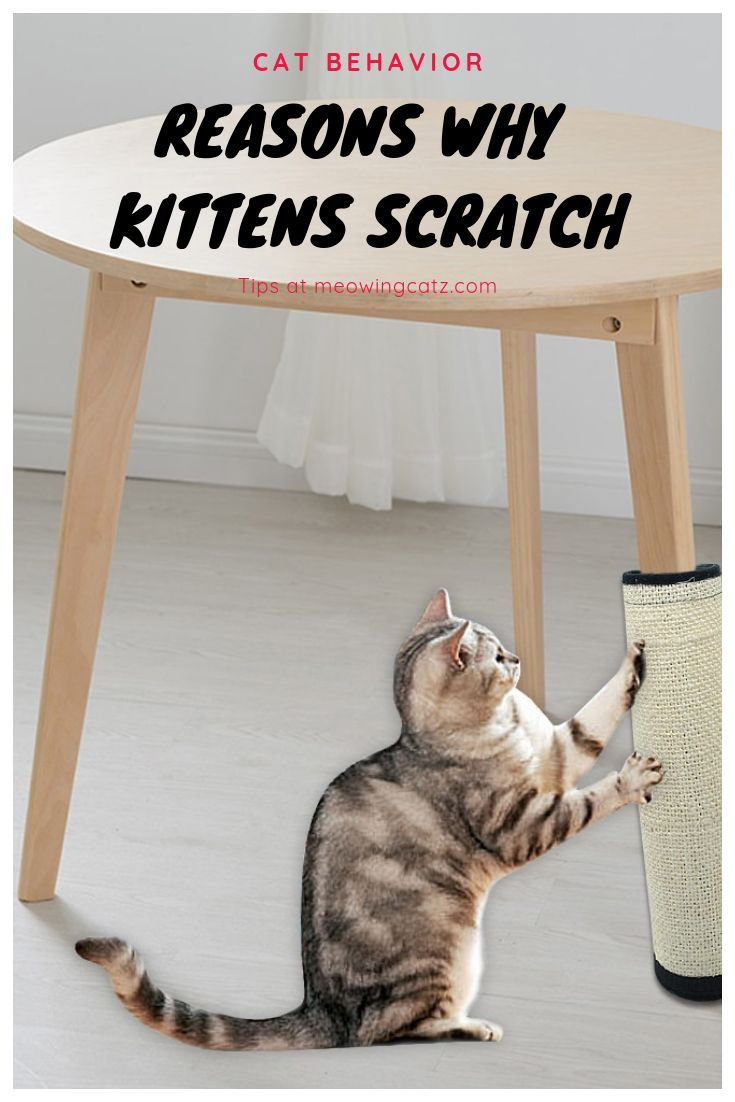 Pin On Cats 101 Tips And Life Hacks