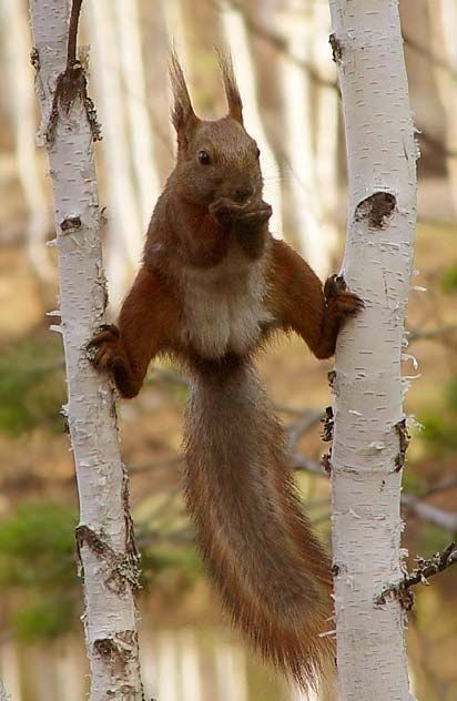 It is clear that this squirrel posses the strongest of all kung fu in the wilderness