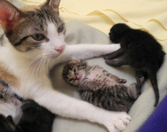 """""""You can look but DON'T TOUCH THEM."""" I love this picture! I want some baby kitties too."""