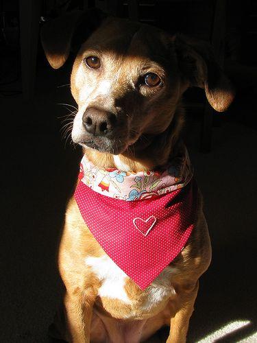 Bandana Bib for 25 pound dog Easy sewing
