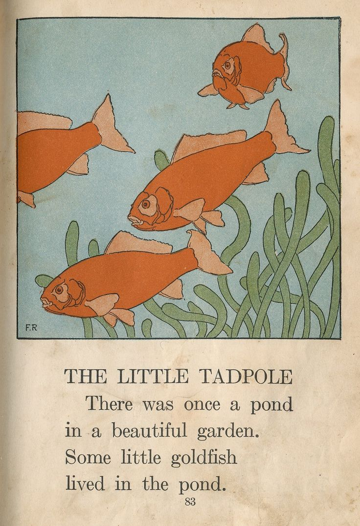 Songbird tattoo created at www mrsite com - Those Are The Meanest Looking Goldfish I Ve Ever Seen 1930s Primary Reader