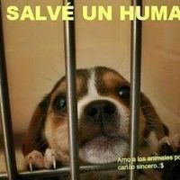 ALL VOLUNTEERS S OF SPAIN TO HELP THE HELPLESS ANIMALS AND WANT TO DISAPPEAR MUNICIPAL KENNELS, AND ANIMALS COME THERE A PROTECTIVE DEPOSITED. FRIENDS ALL VOLUNTEERS S SPAIN, SIGN URGENTLY SO THAT THE ANIMALS WILL NOT BE SACRIFICIED A TODOS LOS VOLUNTARI@S DE ESPAÑA QUE AYUDAN A LOS ANIMALES INDEFENSOS Y DESEAN QUE DESAPAREZCAN LAS PERRERAS MUNICIPALES, Y LOS ANIMALES AL...