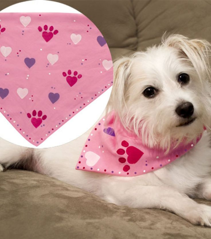 59 best Valentine pets images on Pinterest   Adorable animals ...