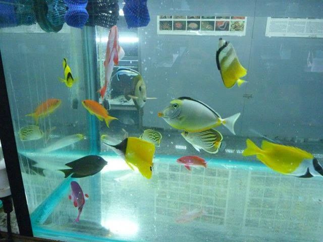 Want To Get The Best Fish & Aquarium products.