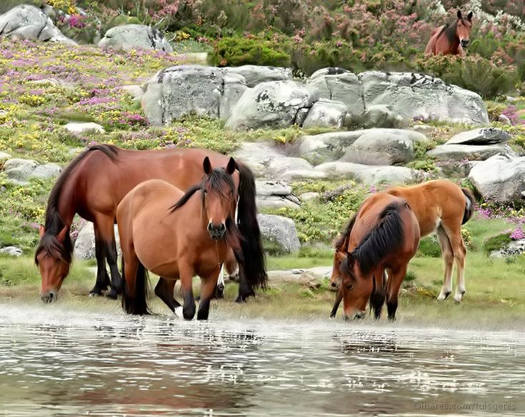 I Like It Wild And Perfect...Always At Gerês National Park,In My Country Portugal !... http://samissomarspace.wordpress.com