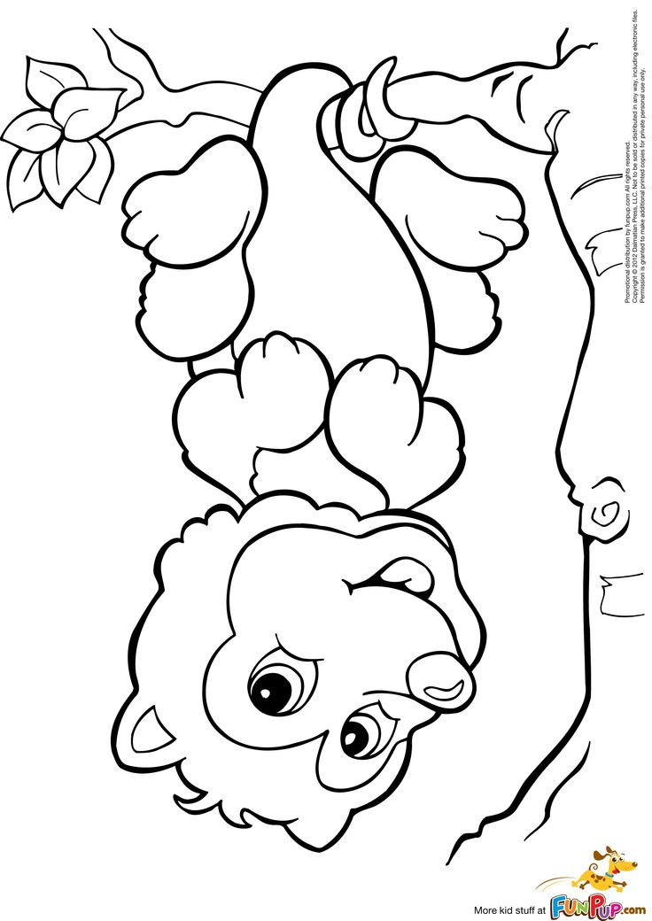 Possum Coloring Page Free Printable