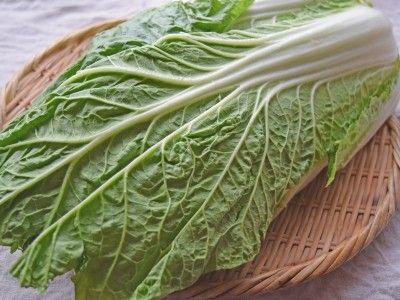 白菜の冷凍保存の方法は?生でダイレクトフリージング