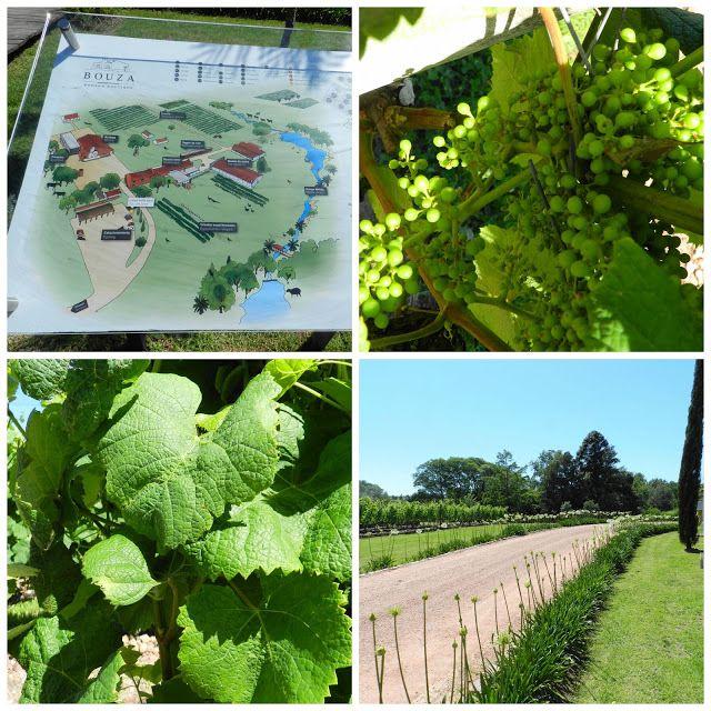 Visita a vinicola Bouza - Montevideo, Uruguai