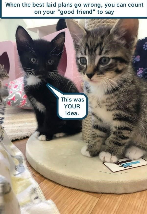 Top 27 Memes Of The Week Cheezburger Users Edition 56 With Images Cat Care Kittens Funny Funny Cat Memes