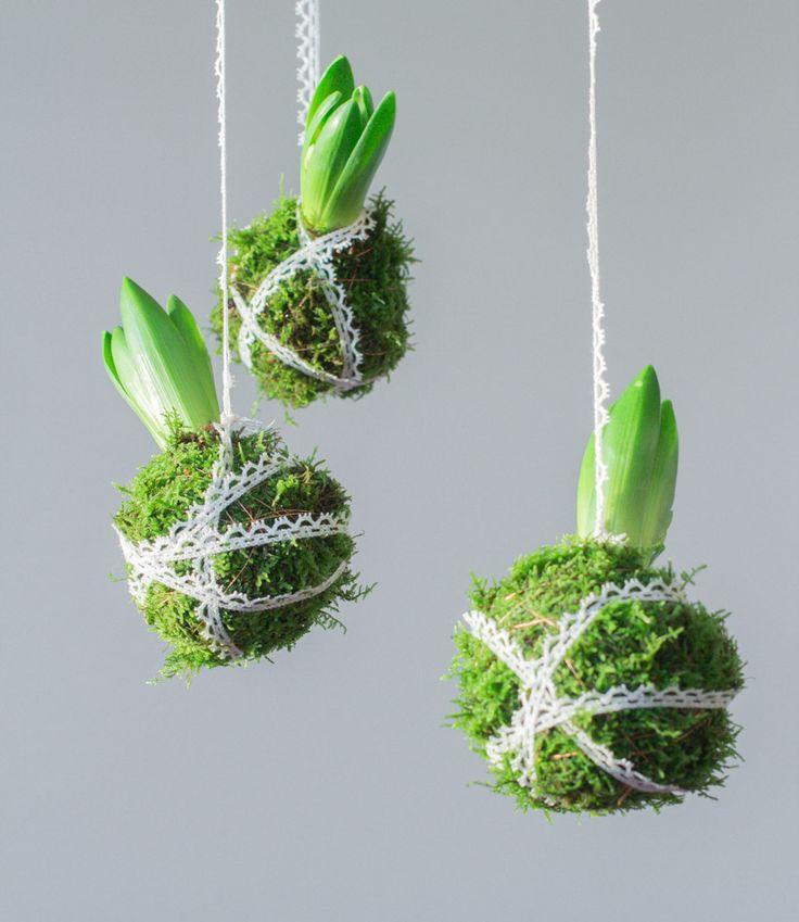Thewildrose.se Tygbuketter, blomsterkurser & annat fint | Hyacint - moss  für das Vasenprojekt