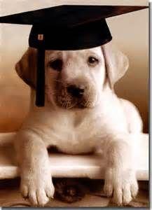 Image result for images dog in graduation cap