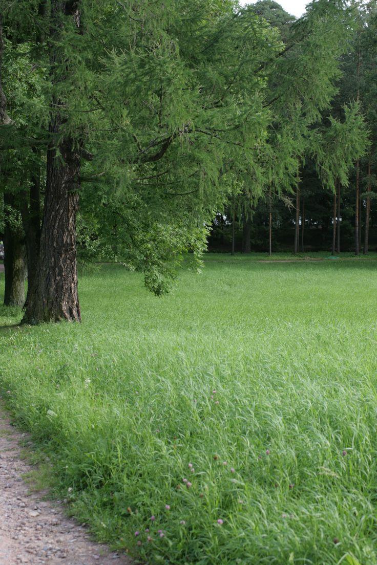 Catherine park /   Tsarskoye Selo /
