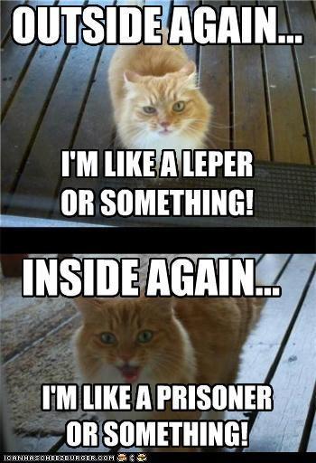 sooooo true!: Dust Jackets, Books Jackets, Funny Stories, Funny Cat, Funny Commercial, Crazy Cat, Funny Photos, Cat Memes, Baby Cat