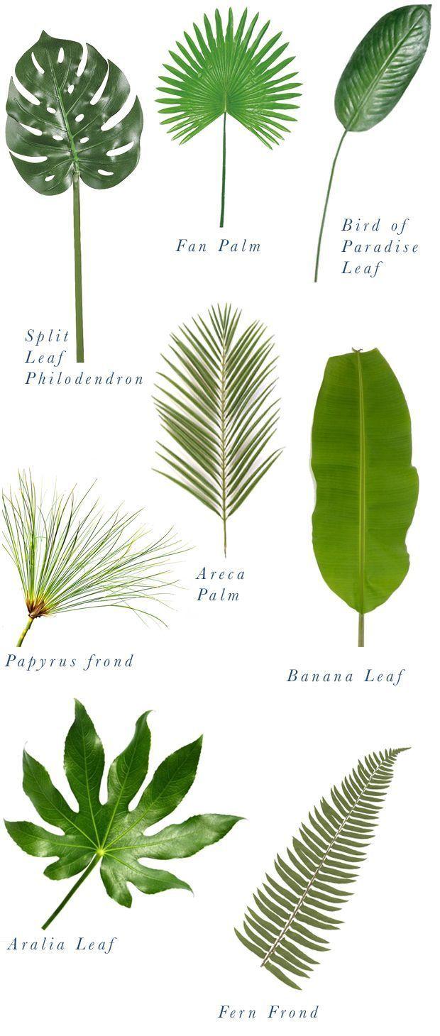 Types of palms.  Source: Justina Blakeney
