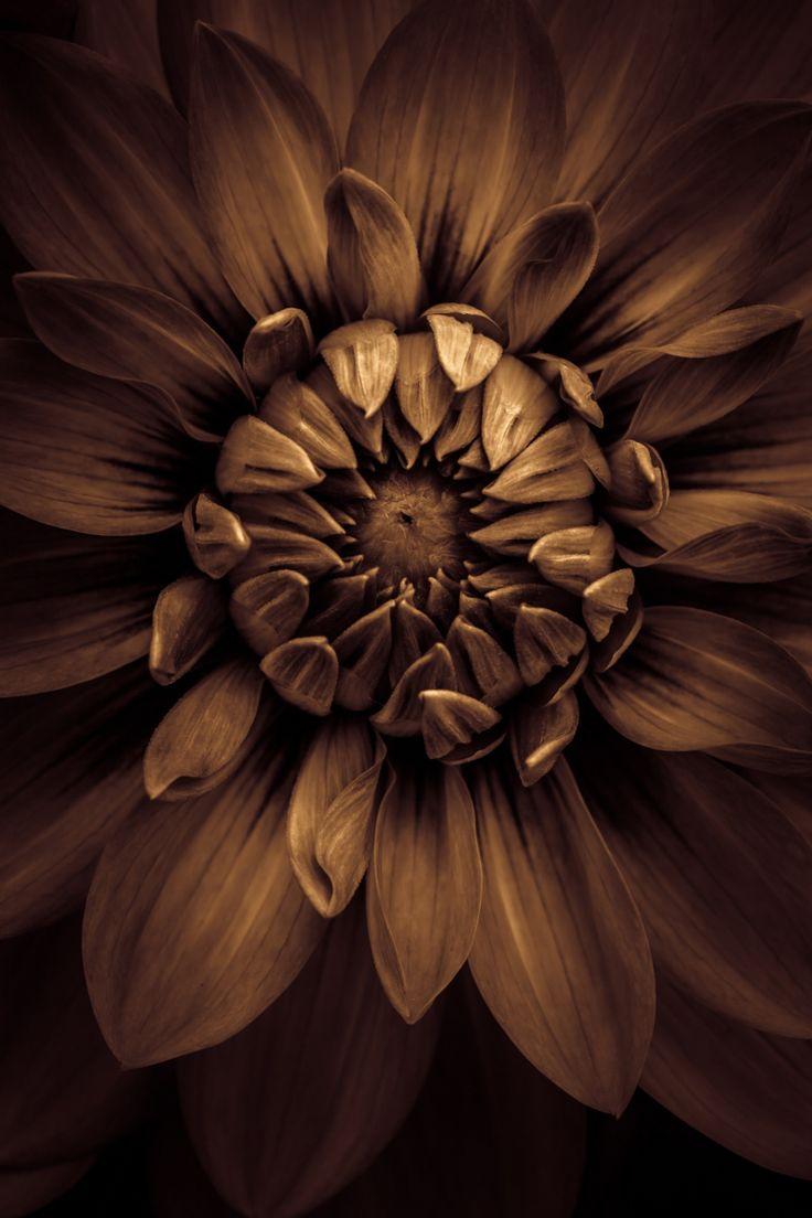 более коричневый цвет картинки цветы ратую