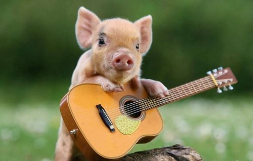 A small pig holding on to a mini guitar.