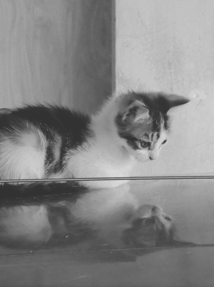 Cat's Mirror