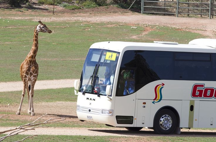 Monarto Zoo - see our comprehensive listing on our website and find out what else you can see at Monarto Zoo