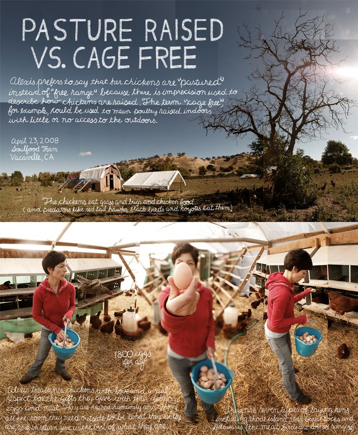 Love these images! Eggs: cage free vs. free range vs. pastured - what does it all mean?