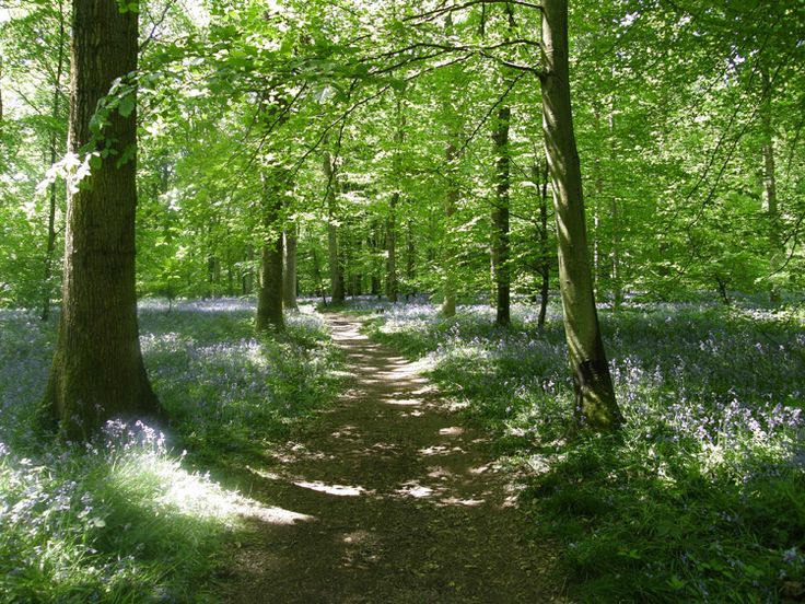 Woodland Weddings - Forestry Commission Weddings - Cheshire - North West