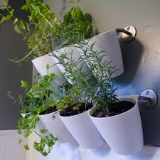 Image result for herbs in the kitchen