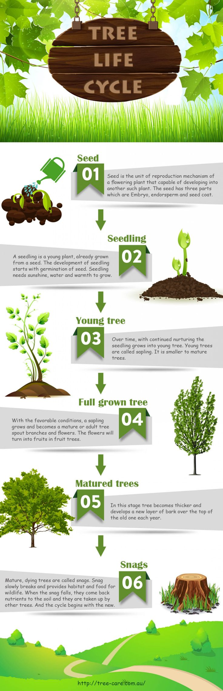 1000  Images About Tree Life Cycle On Pinterest