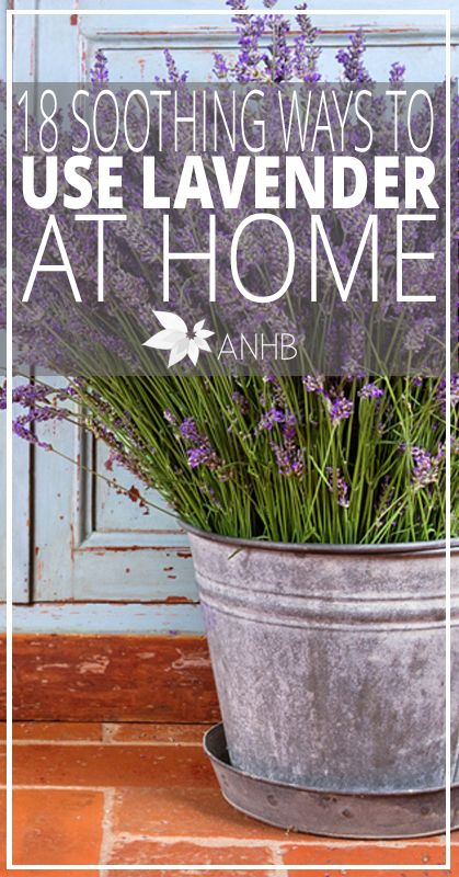 18 Soothing Ways to Use Lavender at Home - All Natural Home and Beauty #lavender #health