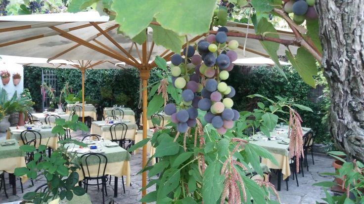 Pizzeria Il Pergolato giardino Pergola, Giardino, Ristorante