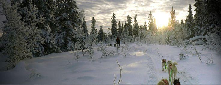 Lappland-Huskysafari