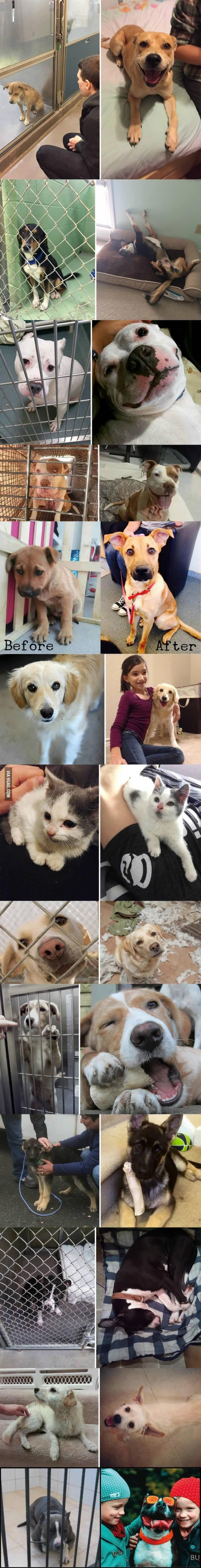Before and after adoption :) this makes me so happy
